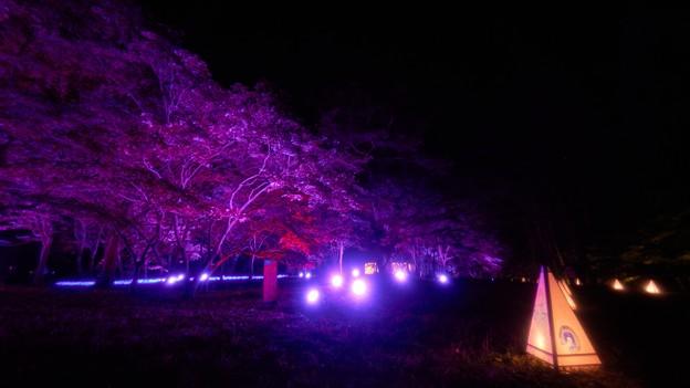 国営武蔵丘陵森林公園-9