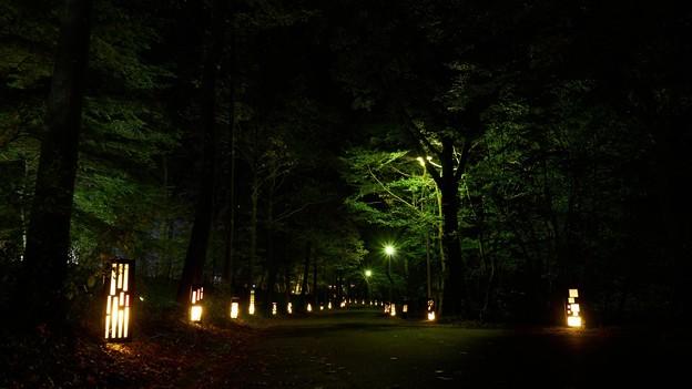 国営武蔵丘陵森林公園-8