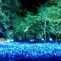 国営武蔵丘陵森林公園-6