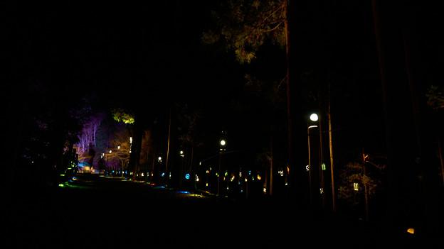竹灯り-2