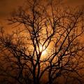 Photos: 夕焼けに染められて