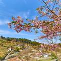 Photos: 花桃の里