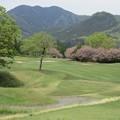 写真: 足利カントリークラブ多幸コース13番の八重桜? 2017.5.3