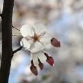 Photos: 春、4月♪
