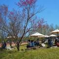 Photos: 四月最後の 行楽日和@世羅高原