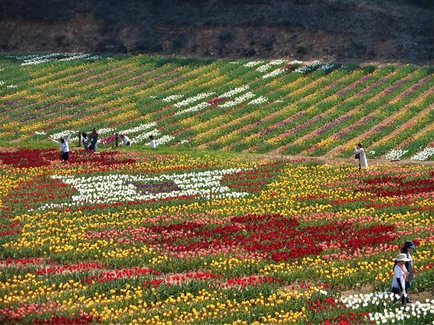 Photos: 20万本のチューリップで描いた花絵@テーマは万華鏡@世羅高原