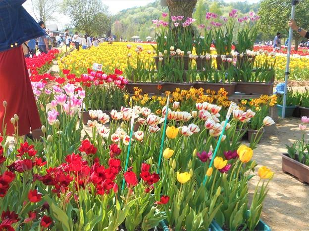 チューリップ祭りの花屋さん@世羅高原
