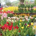 Photos: チューリップ祭りの花屋さん@世羅高原