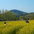写真: パパも撮ったげる@満開の菜の花畑@世羅高原