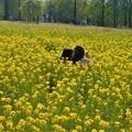 写真: 菜の花畑で遊ぶ二人@世羅高原