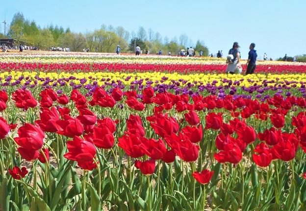 晴れやかな一日@春爛漫の世羅高原
