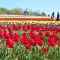 Photos: 晴れやかな一日@春爛漫の世羅高原