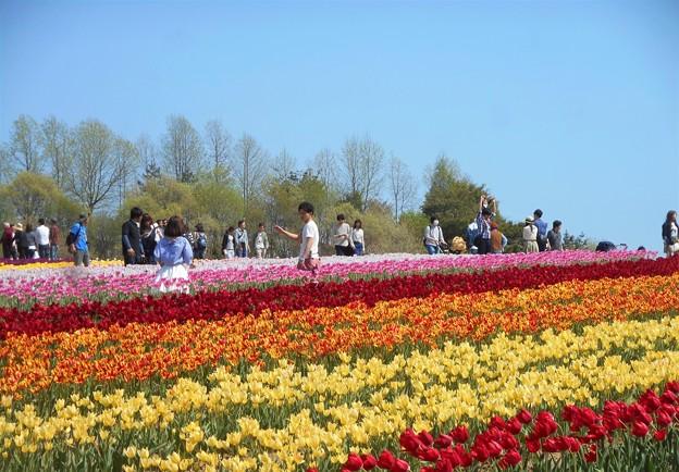Photos: 麗らかなGWの世羅高原@チューリップ畑