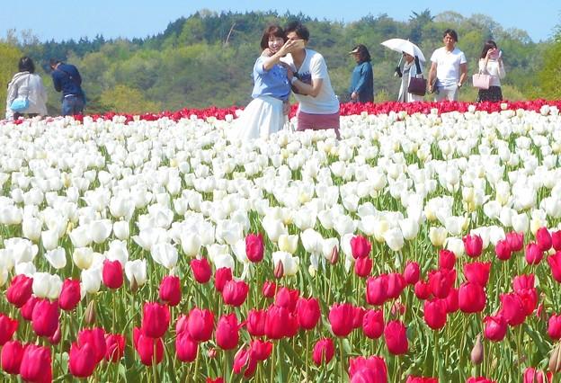 チューリップ畑でツーショット@世羅高原の春