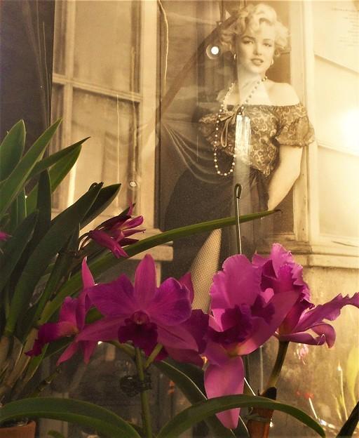 カトレアの花のような@セピア色の追憶