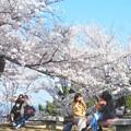 写真: 満開の桜の木の下で@千光寺山の山頂公園