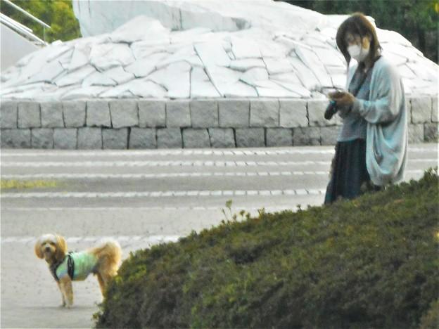 写真: わんこを連れてお散歩中@健康スポーツアリーナ前