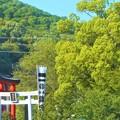 写真: 新緑の候@瀧宮神社