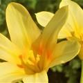 庭に咲く元気な花