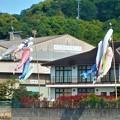 Photos: 港まつりの 鯉のぼり@尾道水道・向島@日立造船・向島工場