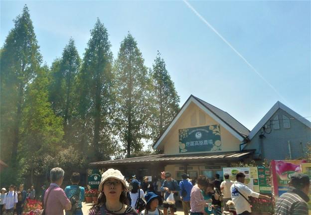 世羅高原農場に到着@花盛りの観光農園・チューリップ祭