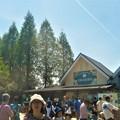 写真: 世羅高原農場に到着@花盛りの観光農園・チューリップ祭
