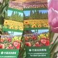 写真: チューリップ祭の入場券@世羅高原農場