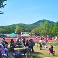 写真: GWの観光農園@世羅高原チューリップ畑