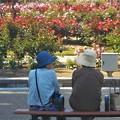 Photos: 緑の風吹く木陰にて@福山・ばら公園