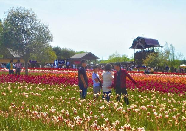 春爛漫のチューリップ畑@立夏の世羅高原台地