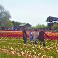 写真: 春爛漫のチューリップ畑@立夏の世羅高原台地