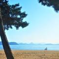 写真: 秋の白砂青松の海岸線@向かいは四国・香川県
