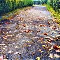 Photos: 落ち葉の散歩道