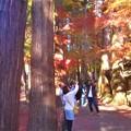 写真: 参道の紅葉は人気の的(まと)@古刹・佛通寺