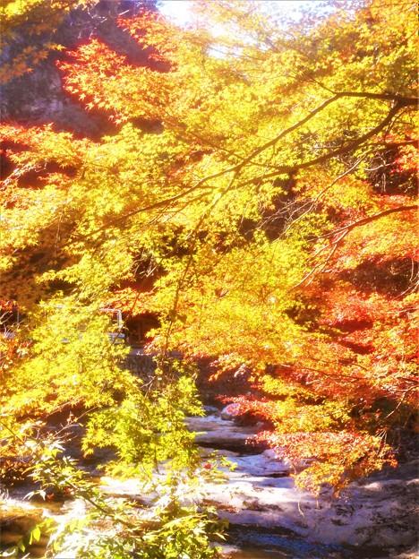 佛通寺川の紅葉