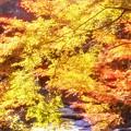 写真: 佛通寺川の紅葉
