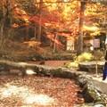 秋の崑崗(こんこう)池@雪舟作@佛通寺
