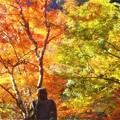 佛通寺の燃える秋と仏様