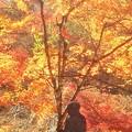 Photos: 晩秋を旅する 仏さま@佛通寺ハイキングコース