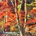Photos: 参道の紅葉@大本山佛通寺・肯心院付近