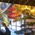 Photos: 大方丈の秋@古刹・佛通寺