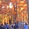写真: 紅葉の参道は神秘的@三原・佛通寺