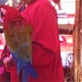 おしゃべりなコンゴウインコと紅葉狩り@古刹・佛通寺