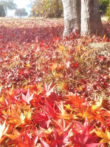 紅く染まる落ち葉たち@備後路