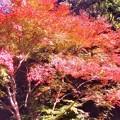 佛通寺の参道の紅葉