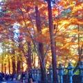 杉木立の参道を行く@佛通寺の燃える秋