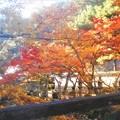巨蟒橋(きょもうきょう)の秋@古刹・佛通寺