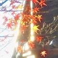 Photos: 散りゆく最後の紅葉@古刹佛通寺・大方丈