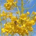 Photos: 青空と菜の花畑