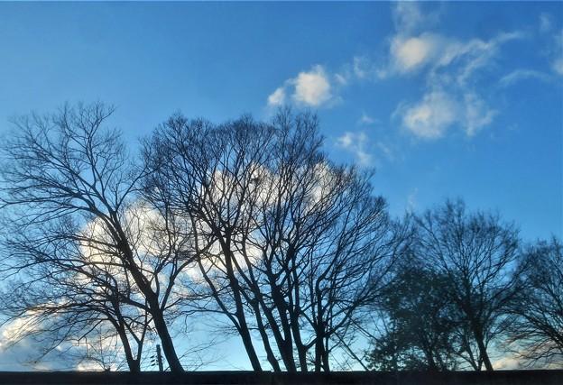 土手の向こうの冬木立
